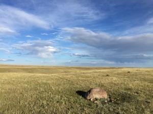 buffalo wallow rock
