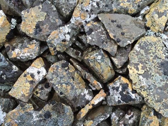 moss on rocks detail