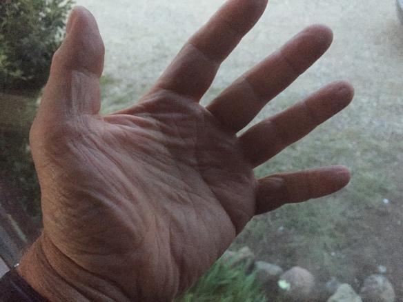 hands after a week