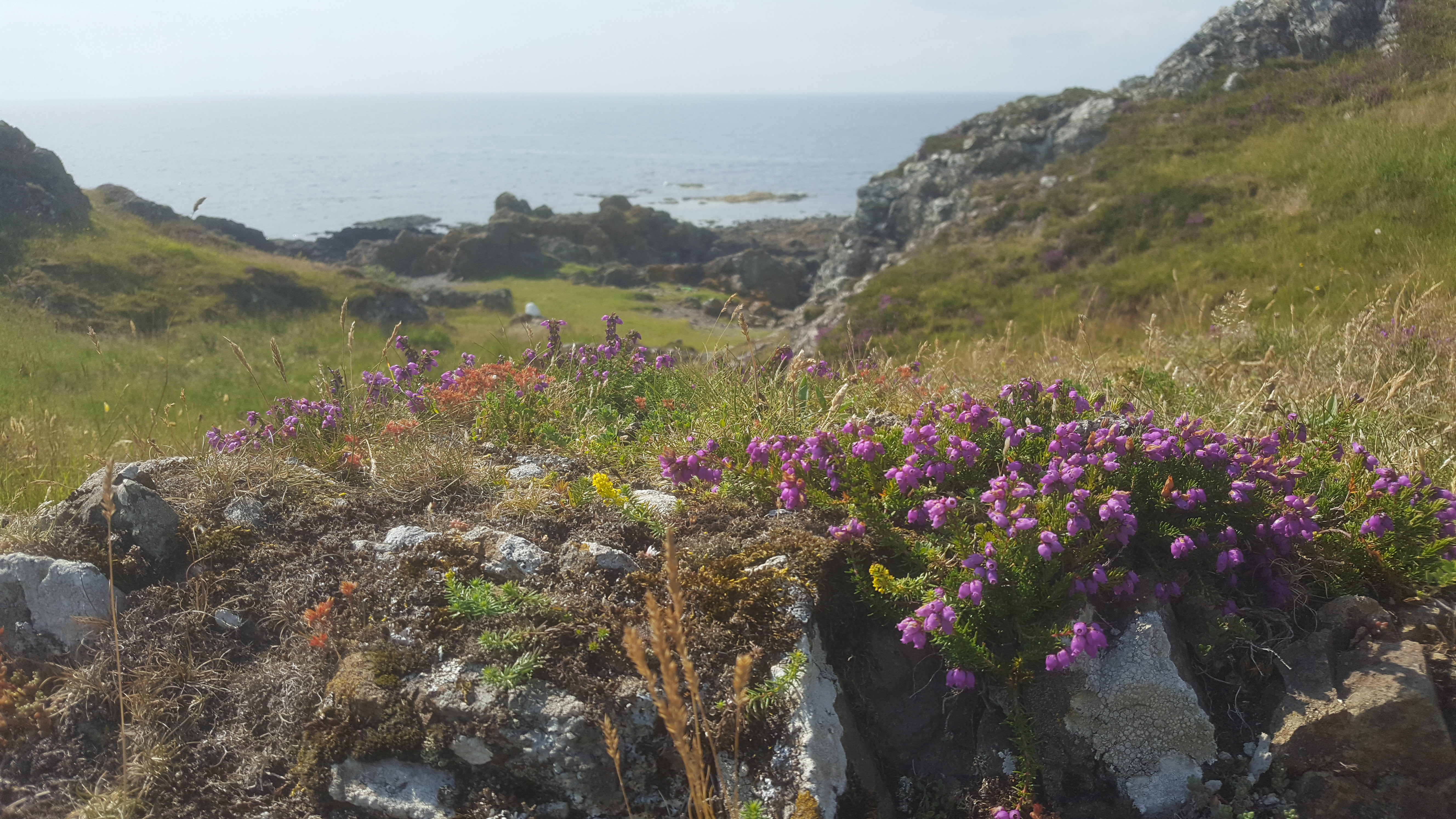 bluebells and ocean