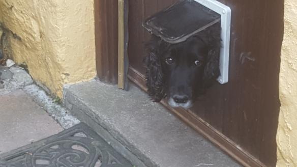 dog looking through cat door