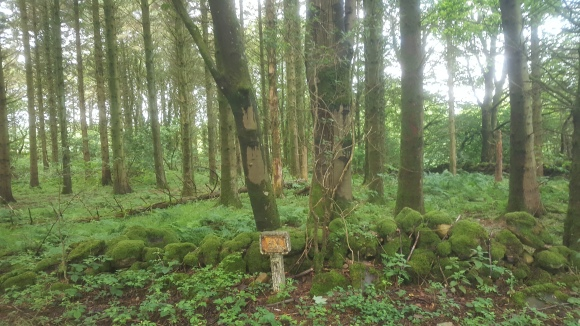Green Scots forest