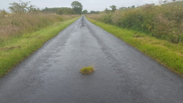 life above all grass patch in road