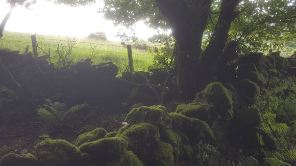 Mossy Stone Fence